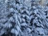 Zimowo w lesie
