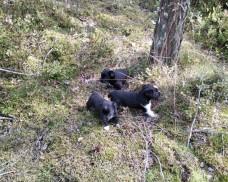 Znaleziono szczeniaki